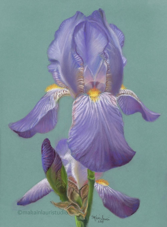 Lavender eleganceg drawing pinterest lavender iris and this is a gallery of original iris pastels by mary ann kainlauri izmirmasajfo