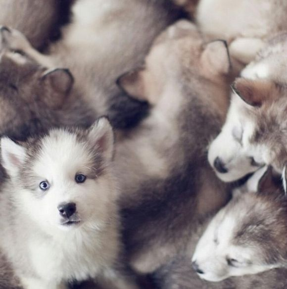 Wee Little Ones | Cutest Paw