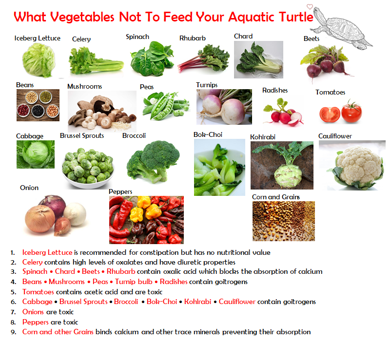 What Vegetables Not To Give Aquatic Turtles Turtle Diet Russian Tortoise Diet Aquatic Turtles