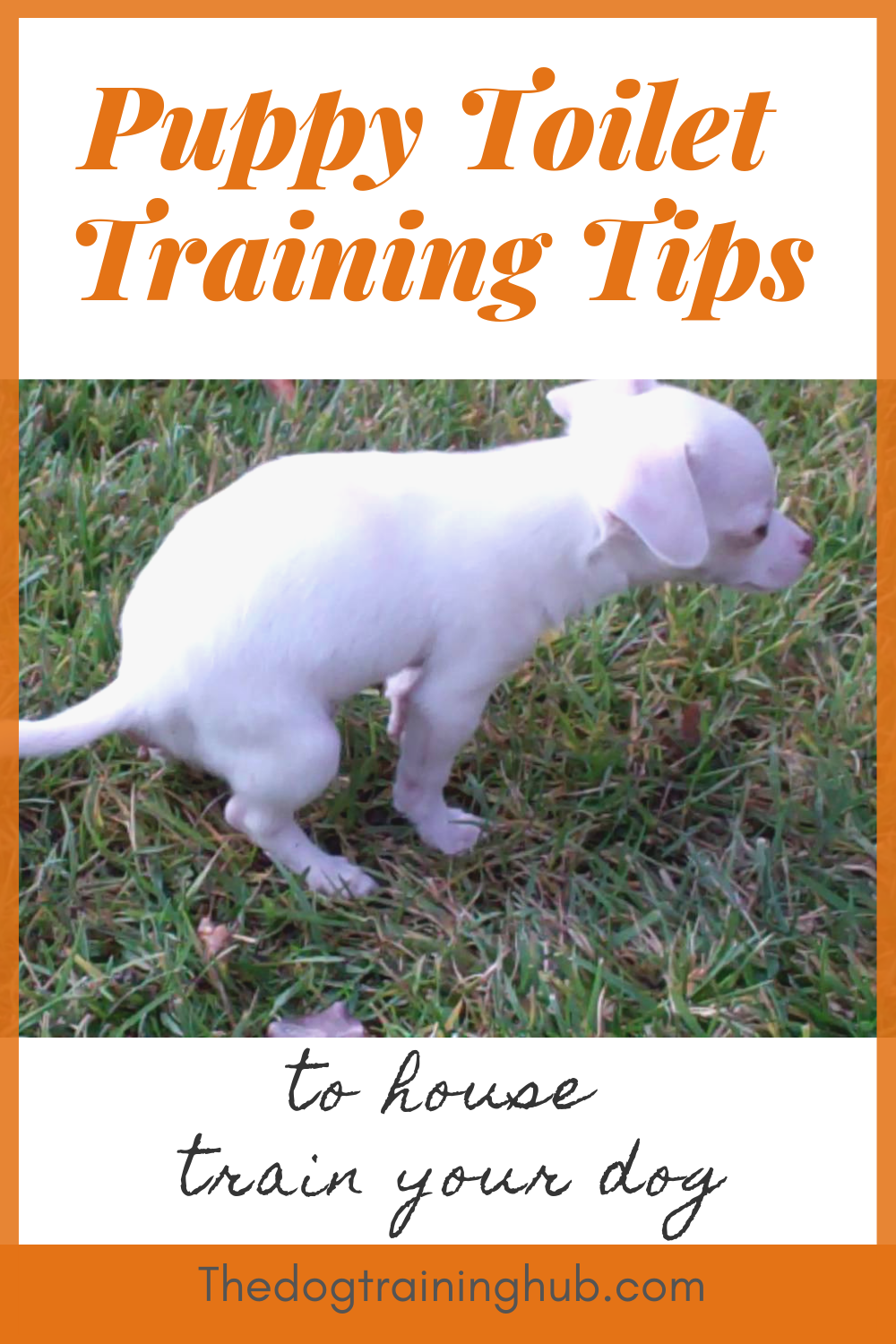 9 Puppy Toilet Training Tips To House Train Your Dog Puppy Toilet Training Training Your Dog Dog Potty Training