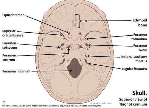 Skull Diagram Superior View Of Floor Of Cranium With Labels Axial