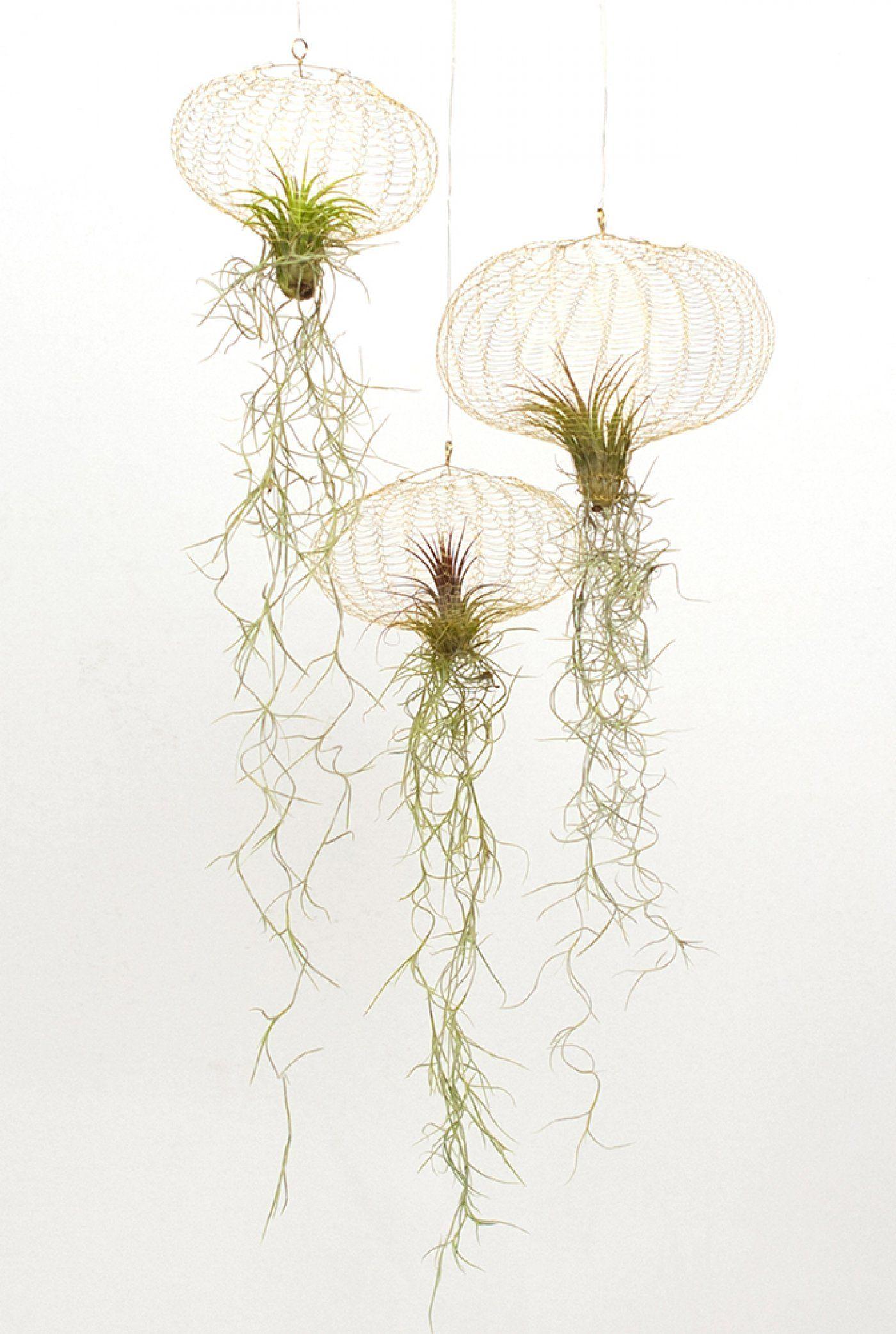 Les Filles De L Air Plante filles de l'air plus | decoration plante, succulentes suspendu