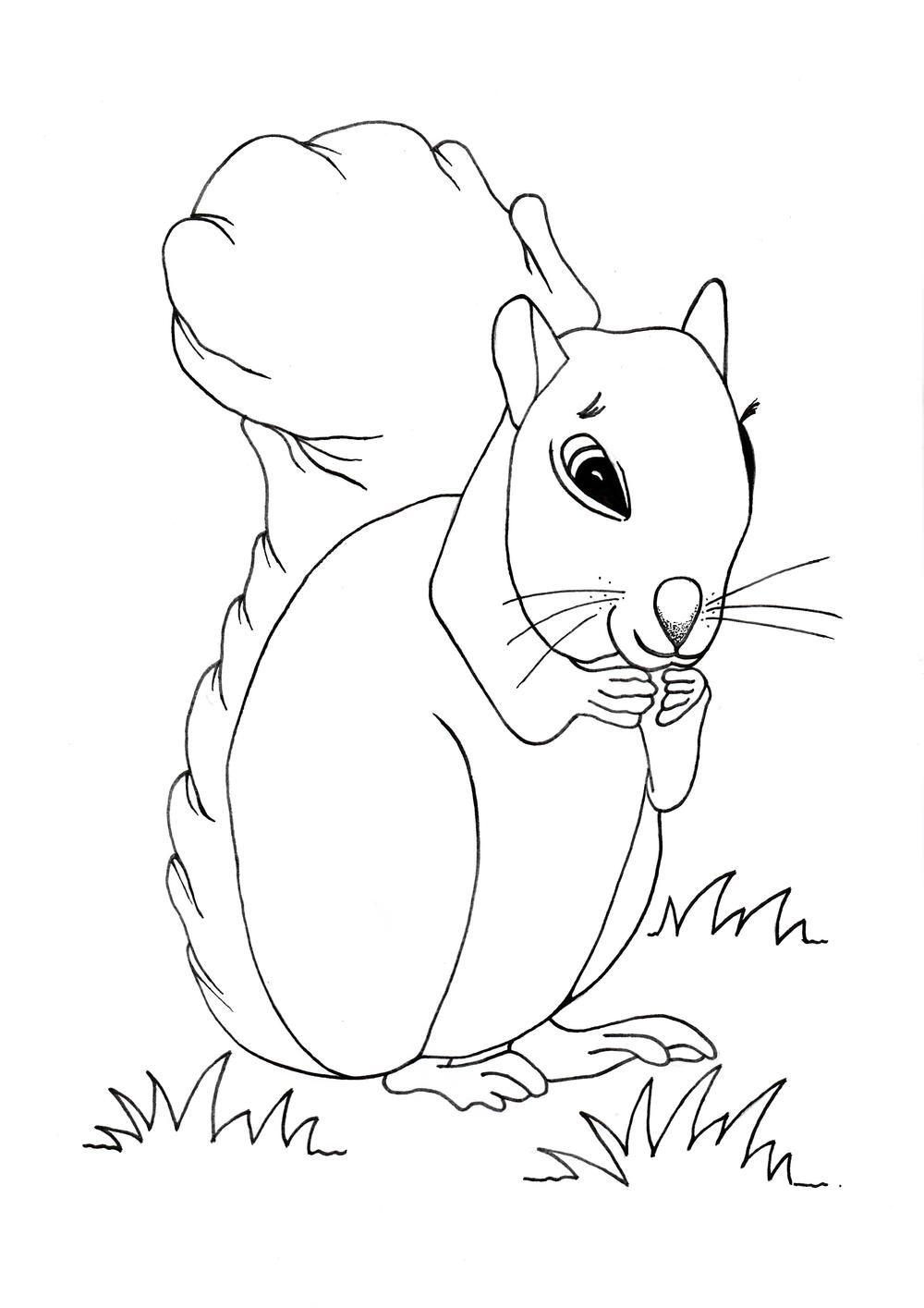Cute Squirrel Coloring Page