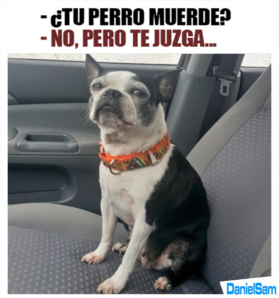 No Muerde Memes Divertidos Libros De Humor Chistes De Perros