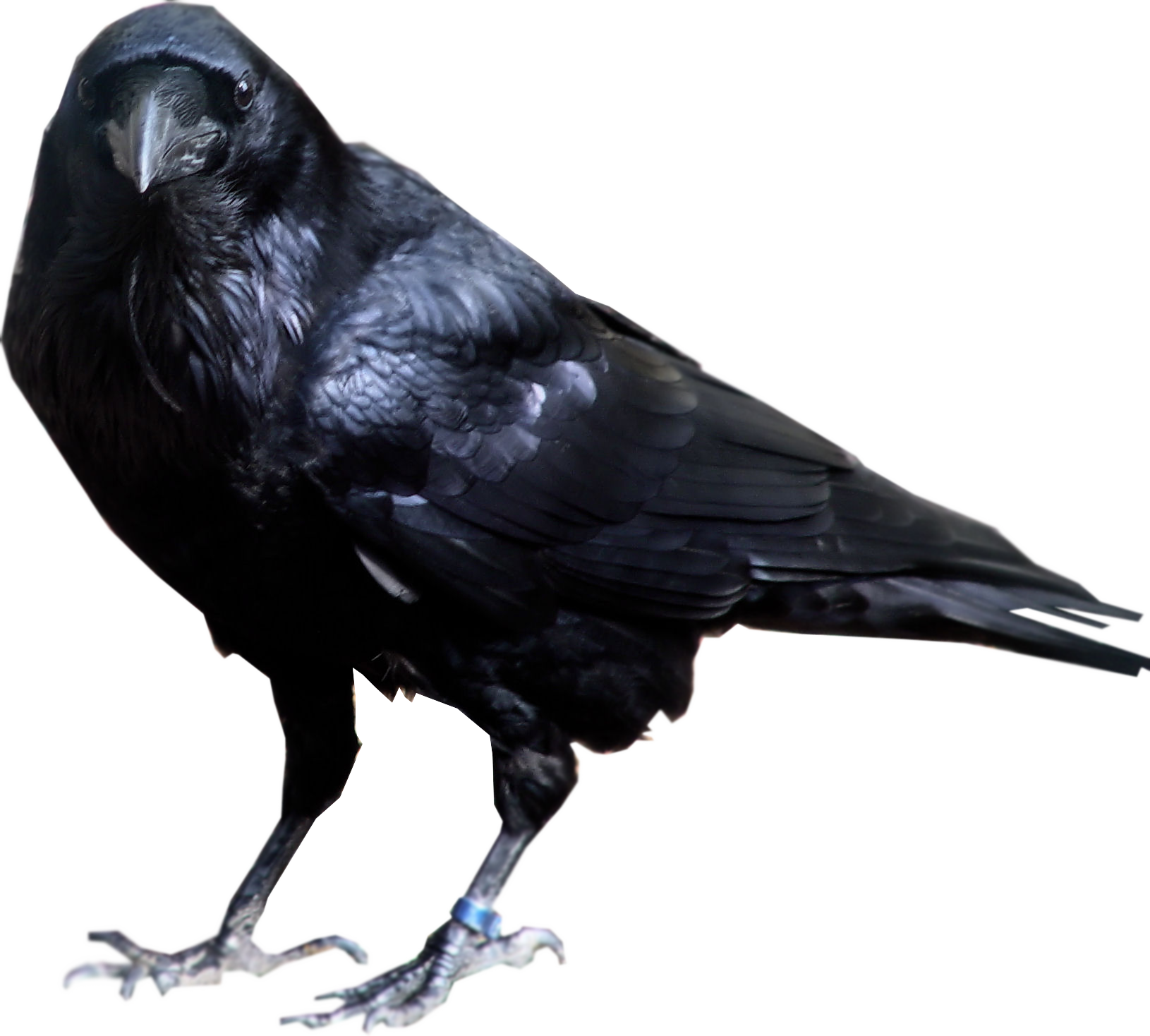 Raven (cool pics of heroes I like from artists). I'll make