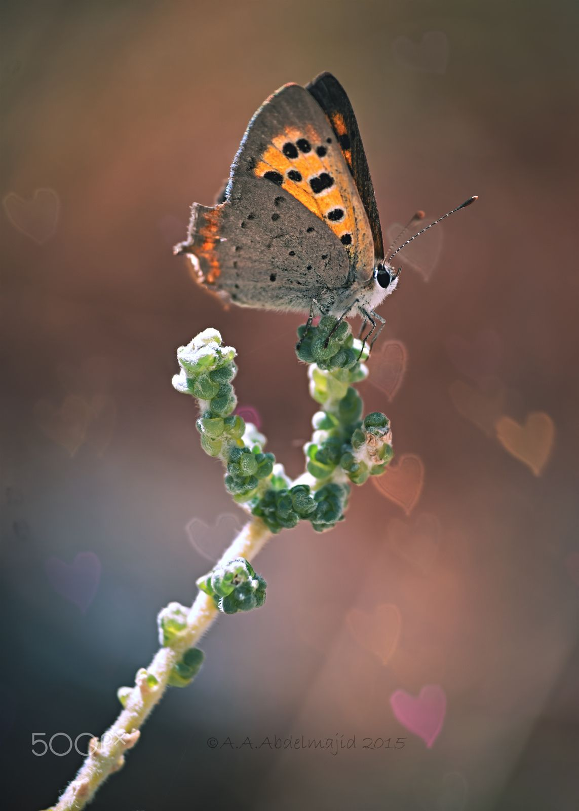 Butterfly....!! A.A abdelmajid on 500px