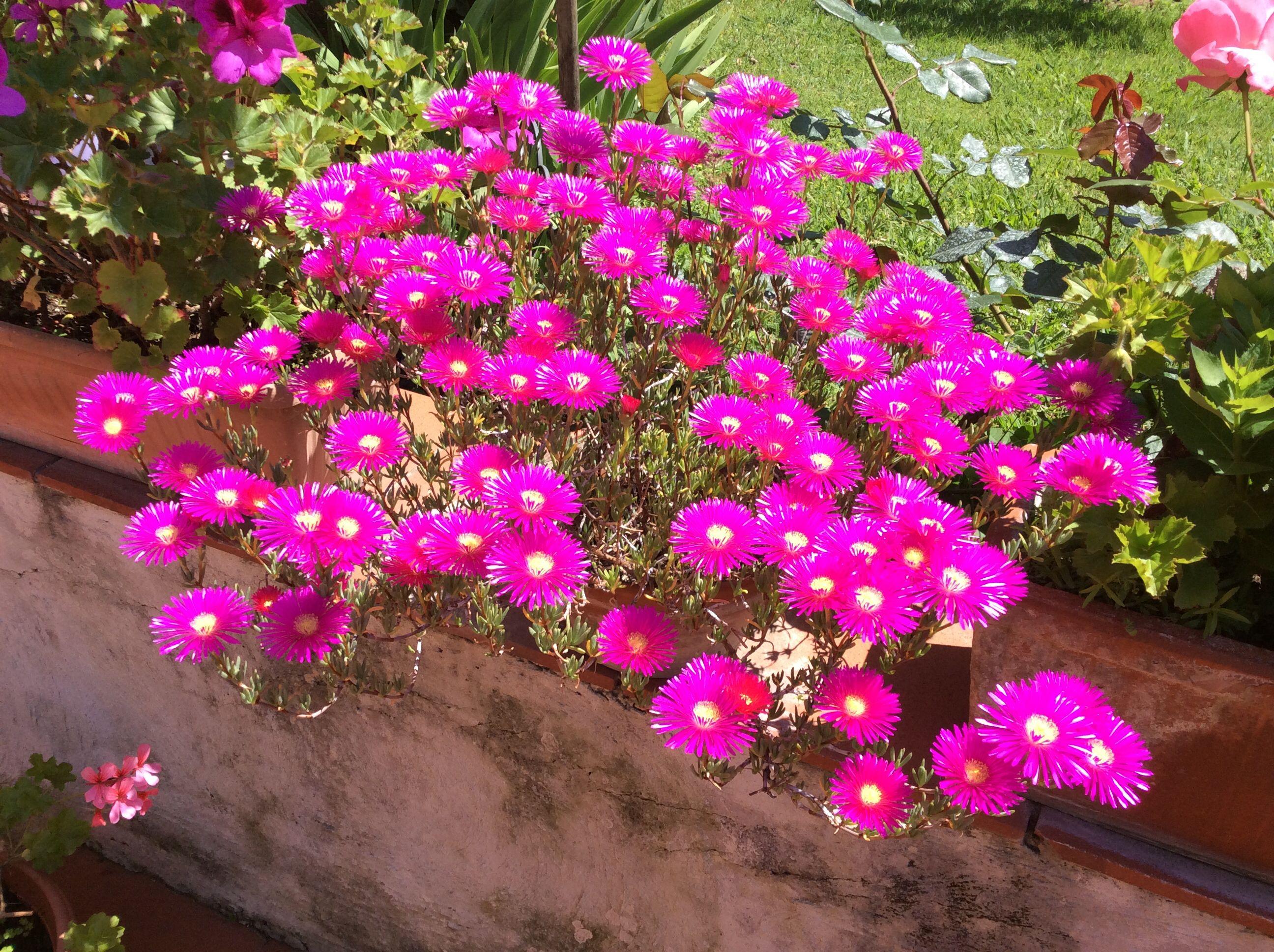 Semigrassa:che colore!!