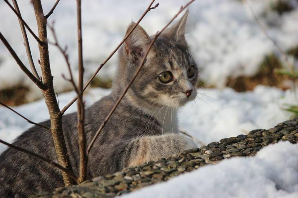 Chaton qui n'aime pas la neige