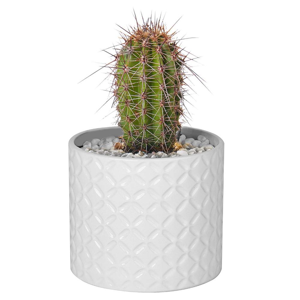 Amazon Com 5 Inch White Ceramic Round Succulent Plant 400 x 300