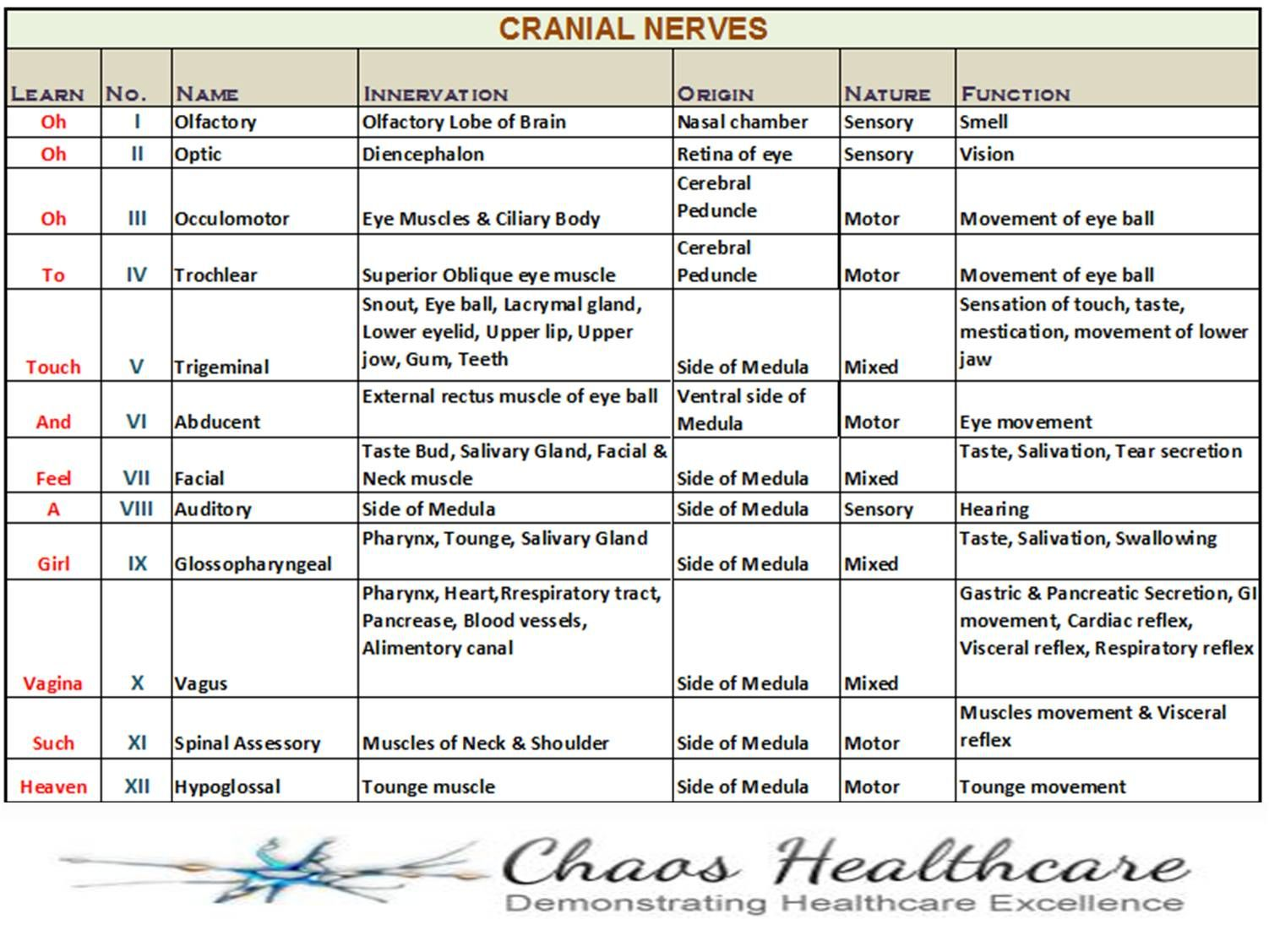 Learning The 12 Cranial Nerves