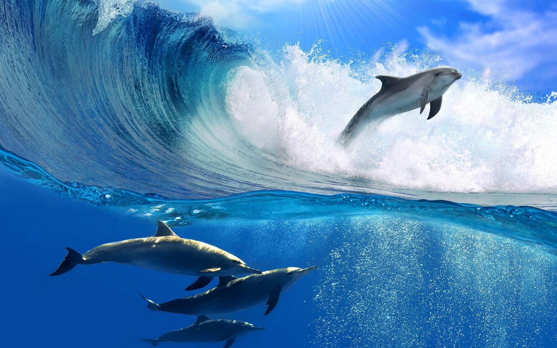 Dolphin Wave Wallpaper HD Wallpaper Top Animals