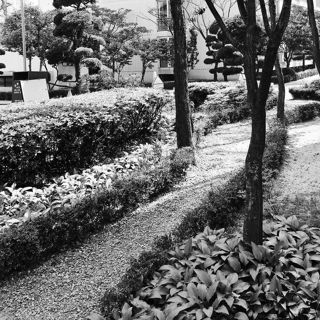 #현대아파트 에는 #군데군데 이런 이쁘고 작은 #정원 이 숨어있어요 #배달 다녀오다가 찍었습니다. #푸르른 #녹음 가득한 #초여름 이었지만 #검게 표현해봤어요 #왕손 #왕손쌈밥 #감사합니다