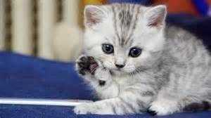 Kitten Gray White Striped Kittens Cutest Cute Cats Cute