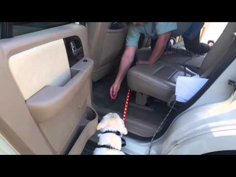 How To Get My Dog To Jump Into The Car