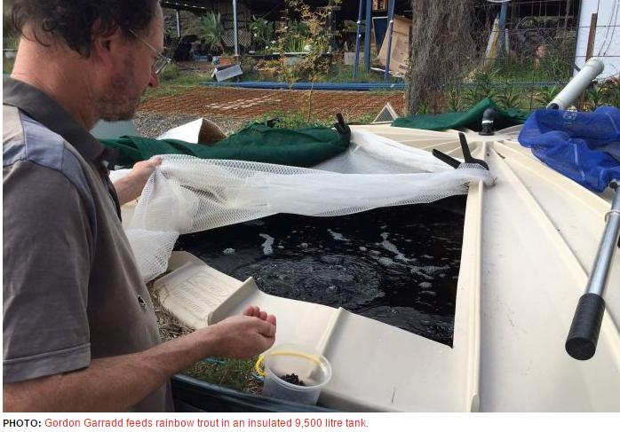 Rainbow trout in Aquaponics... | Aquaponics, Fish farming ...