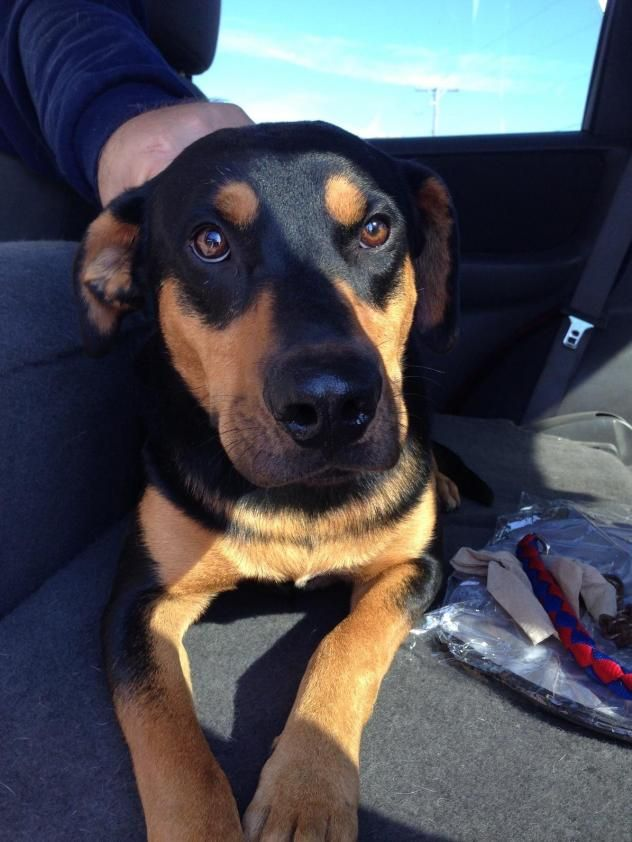 Adopt Lucy On With Images Dogs Coonhound Animal Rescue