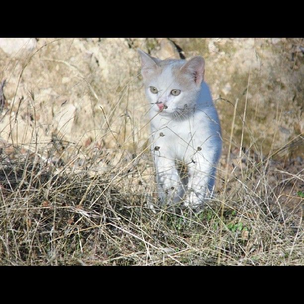 #nofilters #gatos #cats #campo #country