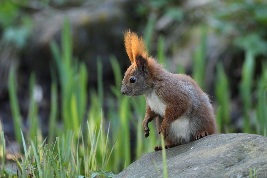 Wiewiórka ...