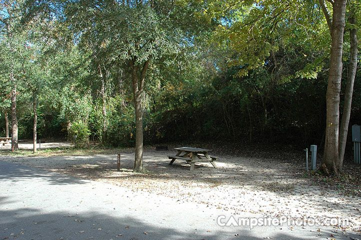 Myrtle Beach State Park Campsite Photos, Camping Info