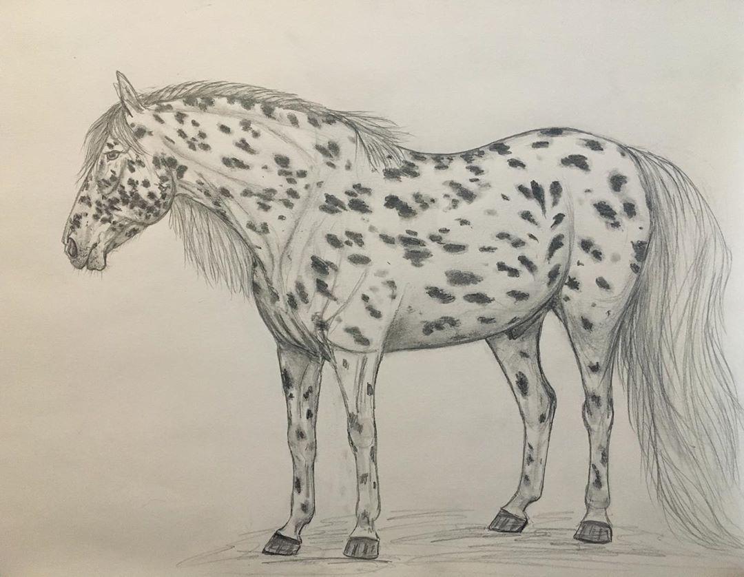 Appaloosa Horse Appaloosa Horses Horses Appaloosa [ 838 x 1080 Pixel ]