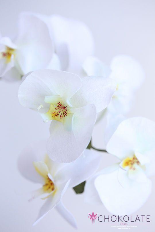 Wafer paper flower orchid phaleanopsis moth sugar flowers wafer paper flower orchid phaleanopsis moth mightylinksfo