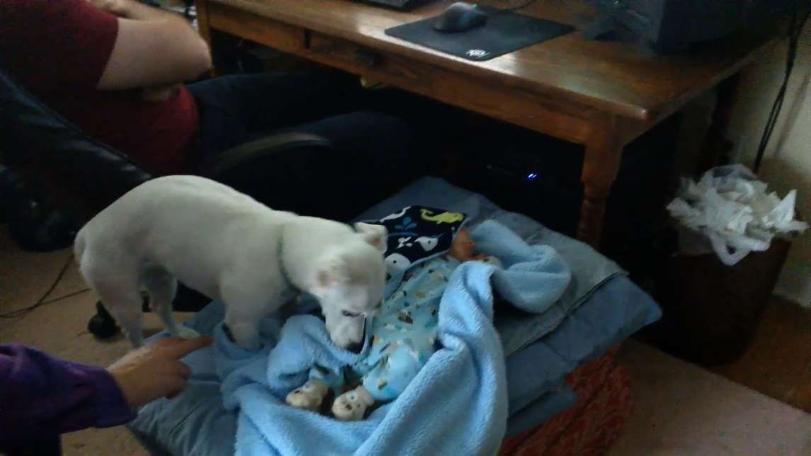 Thereu0027s nothing sweeter than seeing a video of a dog getting along - babysitting duties