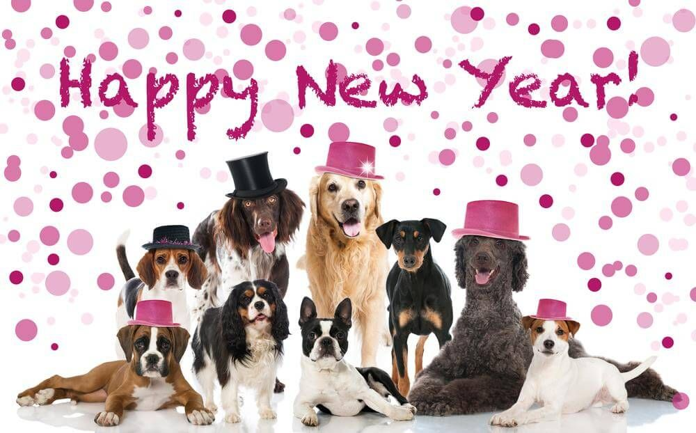 We are celebrating the New Year 20l8 having lots of
