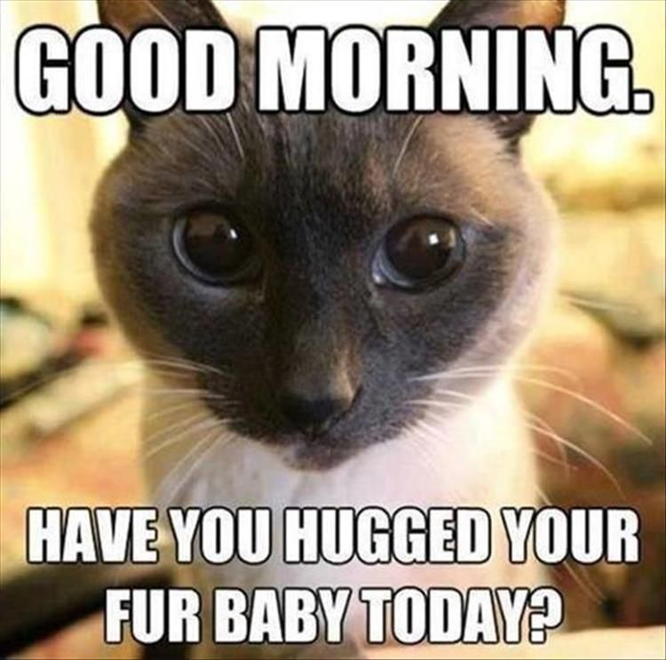 Good Morning Have You Hugged Your Fur Baby Today Funny Animal Pictures Of The Day 21 Pics Funny Animal Pictures Funny Animal Memes Funny Animals