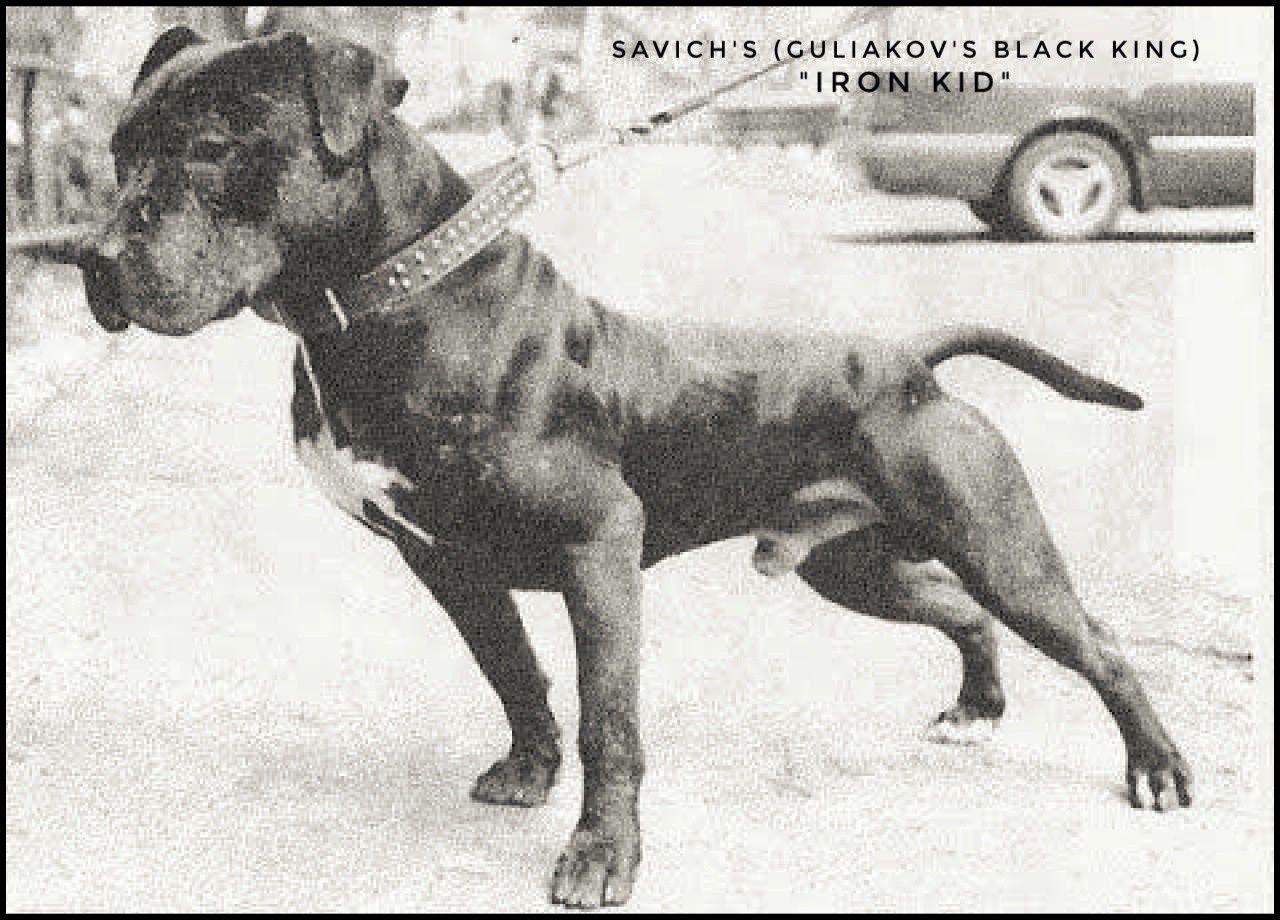 GameDogs Pedigree: SAVICH'S (GULIAKOV'S BLACK KING) IRON KID