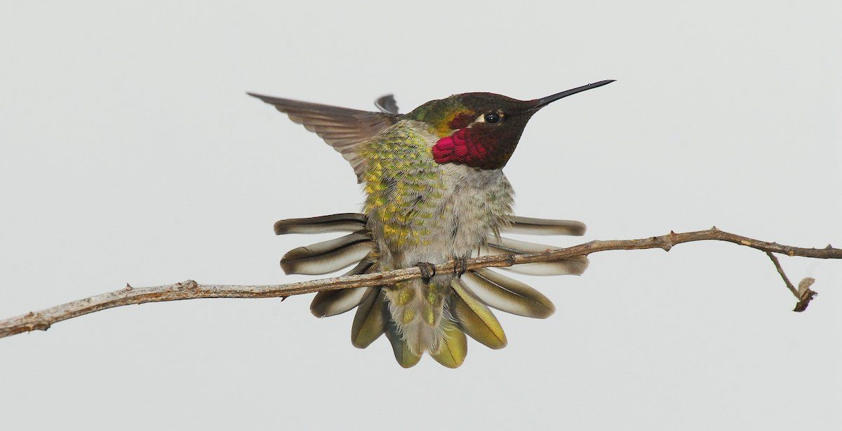 Hummingbird Migration We Have Heard Many People Say They Wished Their Hummingbirds Would Migrate South So Humming Bird Feeders Hummingbird Migration Tiny Bird