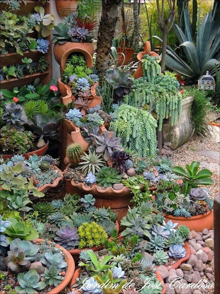 Behälter mit Sukkulenten die wunderschön zu einem üppigen Garten zusammengefasst wurden. # #succulents