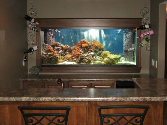 Image Detail For  Aquarium Built Into Wall Behind Lower Level Bar
