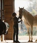 Equine Courses Accredited Equine Behaviour Psychology and First Aid Courses