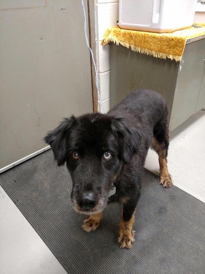 Close Optionssharesendlike Like Love Haha Wow Sad Angry Timeline Ct Pets Reunited Adopted Deceased Animals Animal Control Pets