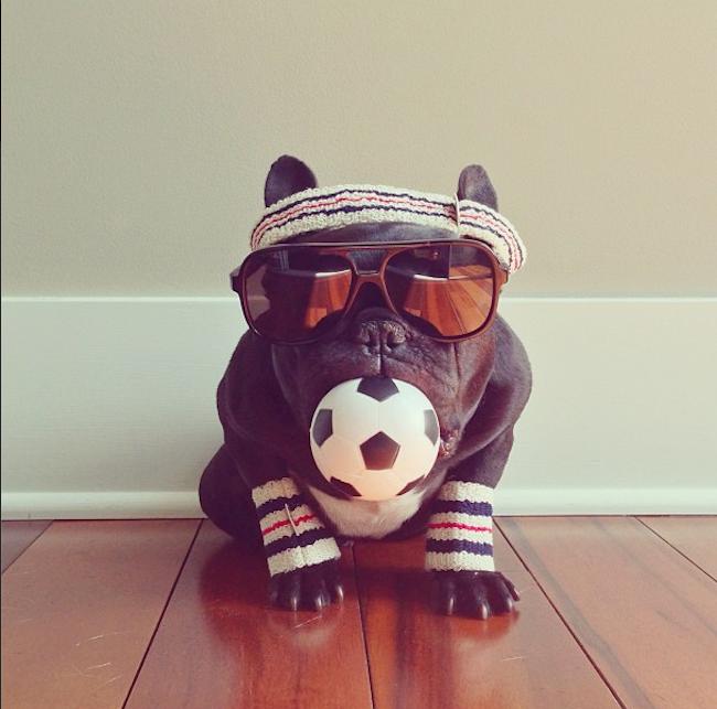 Fotos de gatos y perros en Instagram causarán impuestos. ElDeforma.