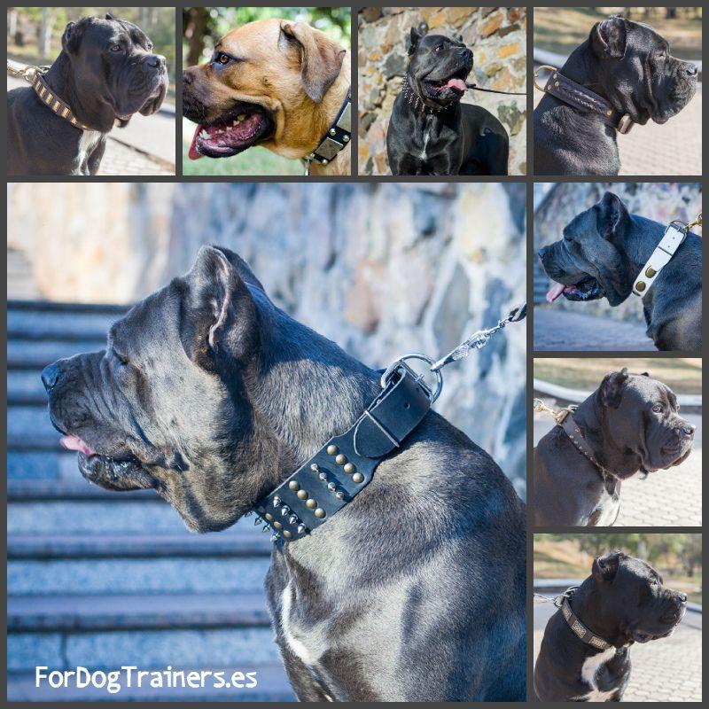 Amplia variedad de #collares para #perros de la raza #Cane corso. Haz clic en el enlace y llegate a la página de productos para esta raza https://www.fordogtrainers.es/index.php/resultados-de-la-b-squeda/productos-por-raza/?custom_f_76[0]=43616e6520636f72736f