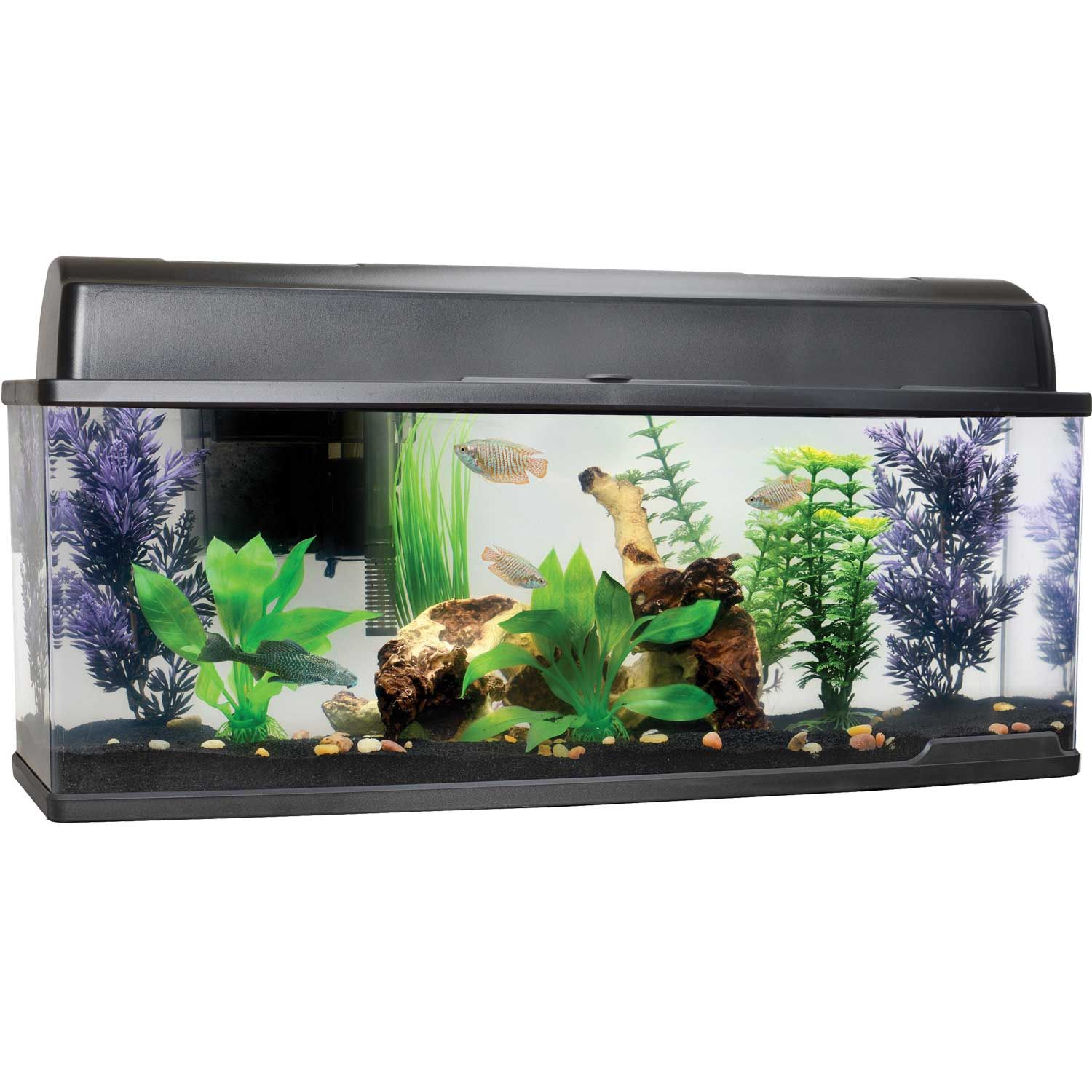 Fish for aquarium online - Product Description Petco Bookshelf Freshwater Fish Aquarium Find This Office Fish Tank And Home Aquarium Online Today With Its Slim And Sleek Design The