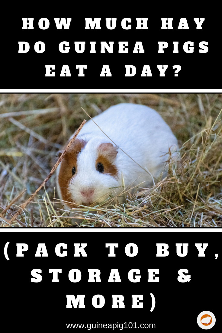 Pin On Guinea Pig Food