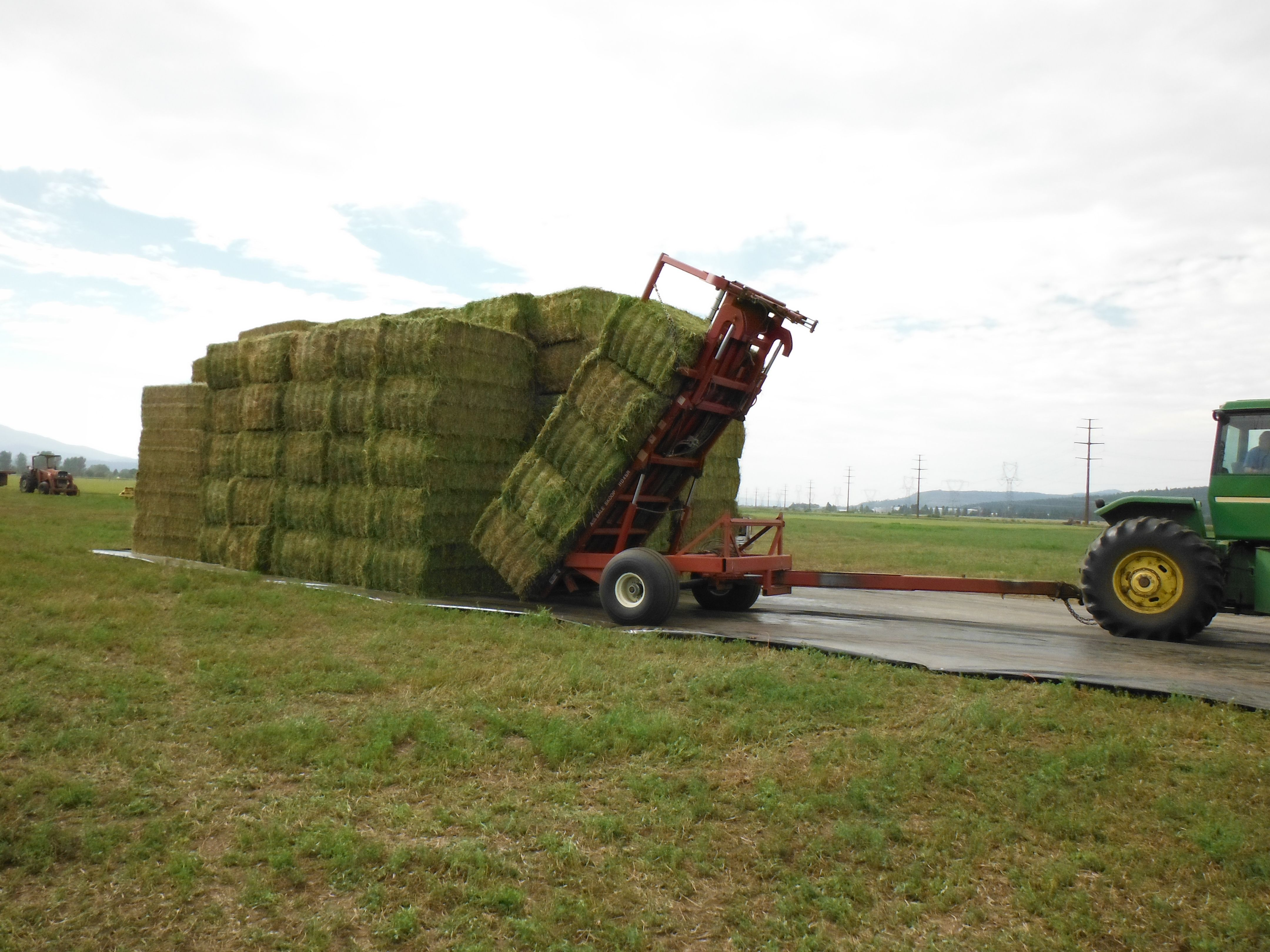 how to grow alfalfa hay for horses
