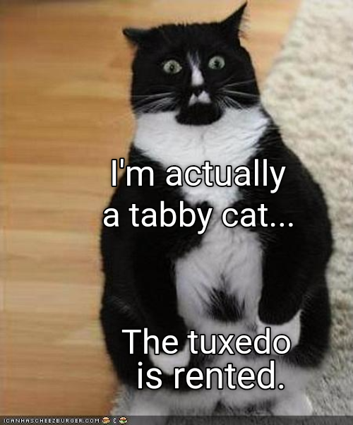 The Clothes Make The Cat Beautiful Black Tuxedo Cats Cats