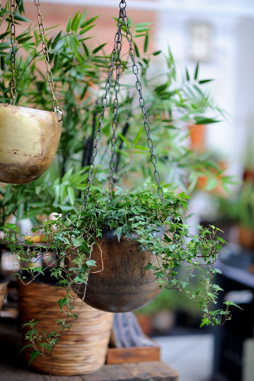 Rosliny Doniczkowe Ogrod Lobzow In 2020 Plants