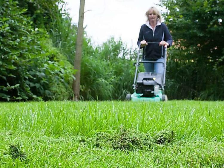 Das Ist Die Beste Zeit Zum Vertikutieren Rasen Dungen Vertikutieren Rasen