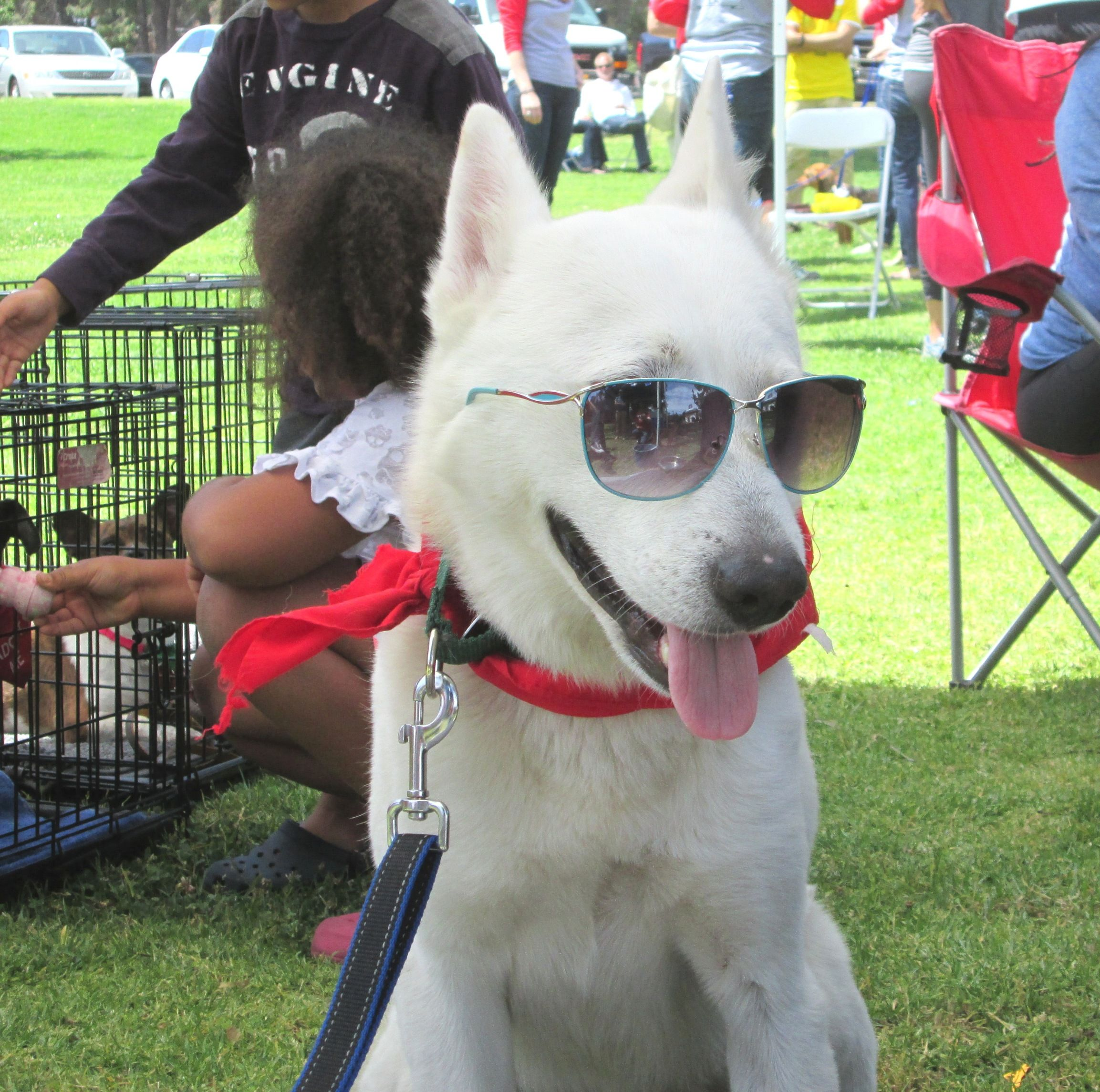 Boris plays it cool at the Helpful Honda adoption event in