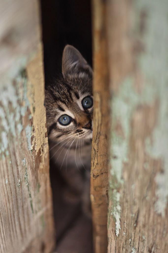 peek . .