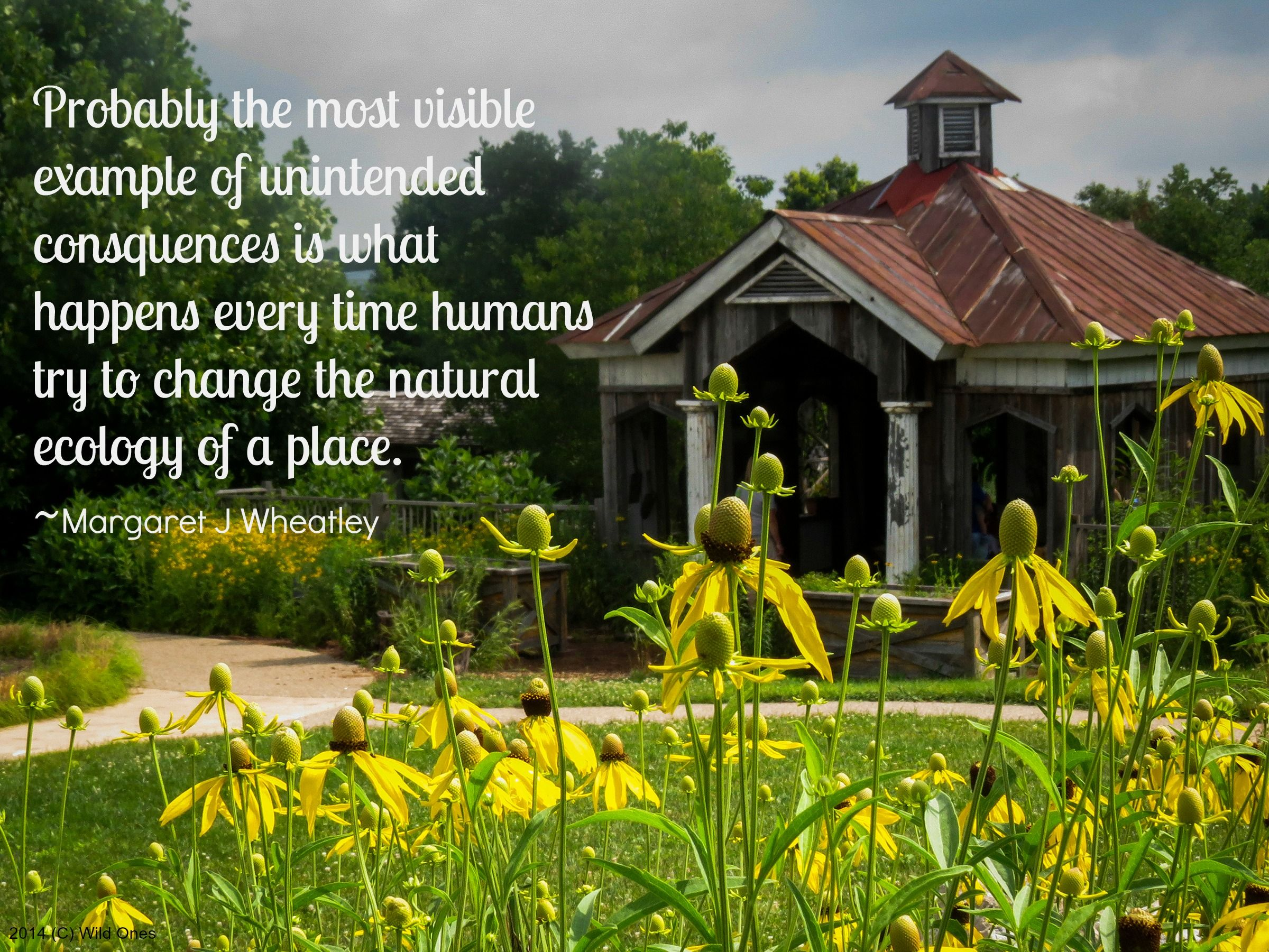 Wheatley Quote With Images Garden Quotes Ecology Native Plants