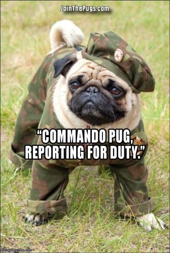 Commander Pug To The Rescue Pugs In Costume Cute Pugs Pugs