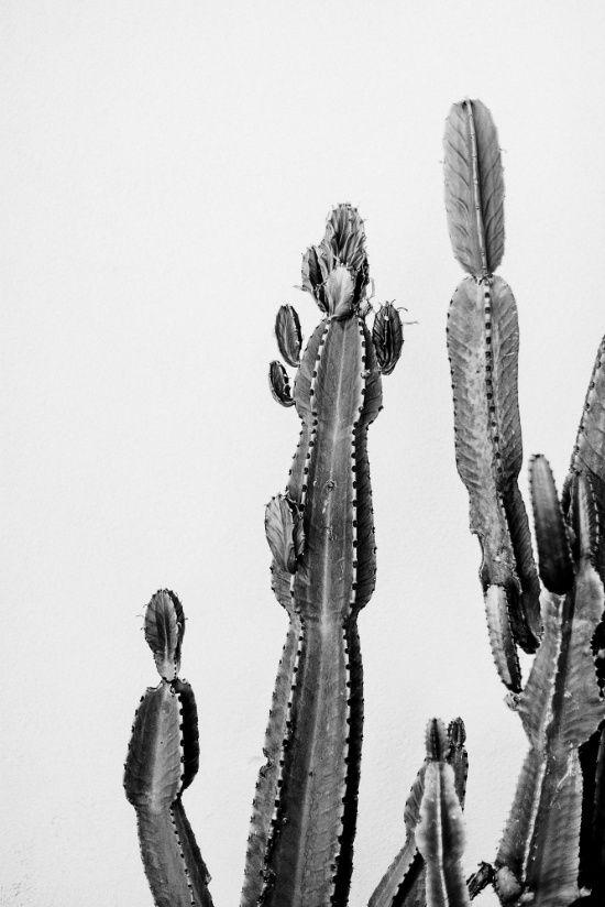Vintage cactus friend art print cactus art cactus poster black white