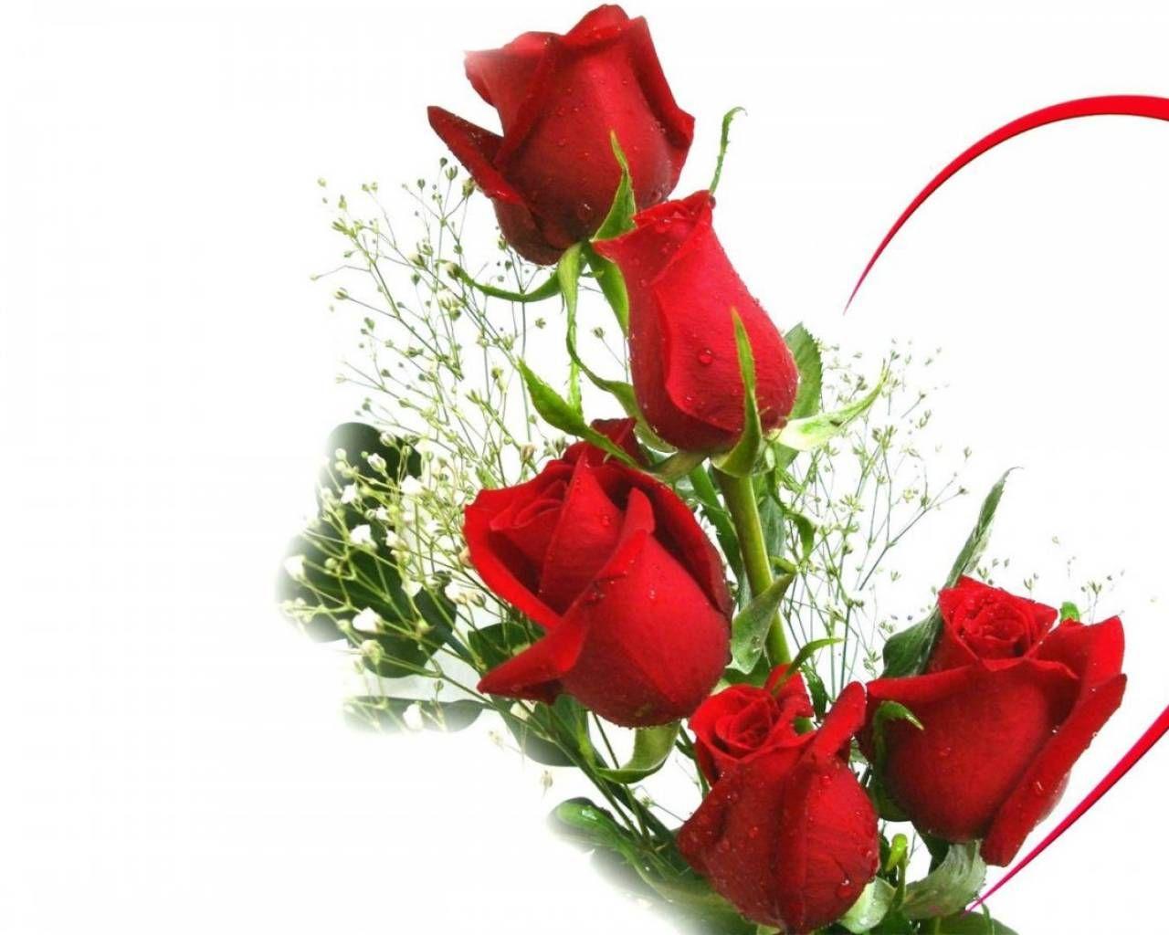 rosas para fotos
