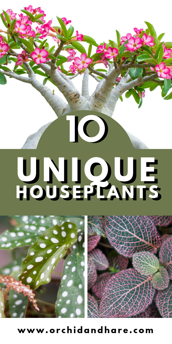 20 Weird House Plants You Didn T Know You Needed Weird Plants Unusual Plants Plants