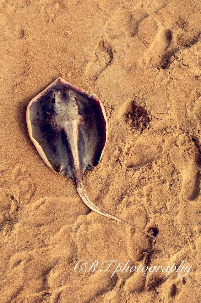 Stingray beach
